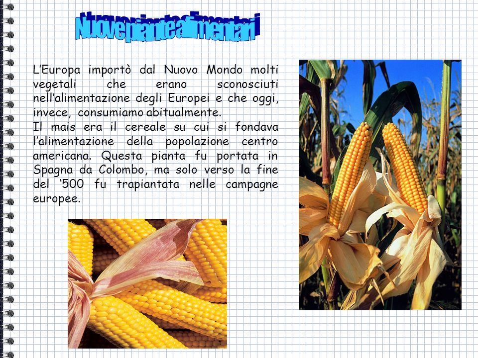 Nuove piante alimentari
