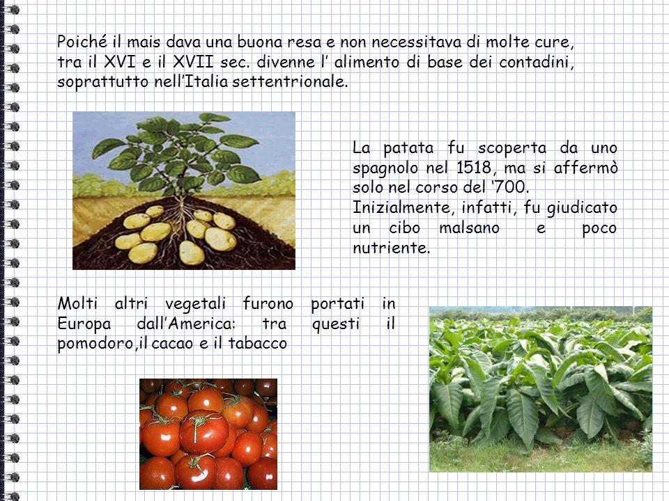 Poiché il mais dava una buona resa e non necessitava di molte cure, tra il XVI e il XVII sec. divenne l' alimento di base dei contadini, soprattutto nell'Italia settentrionale.