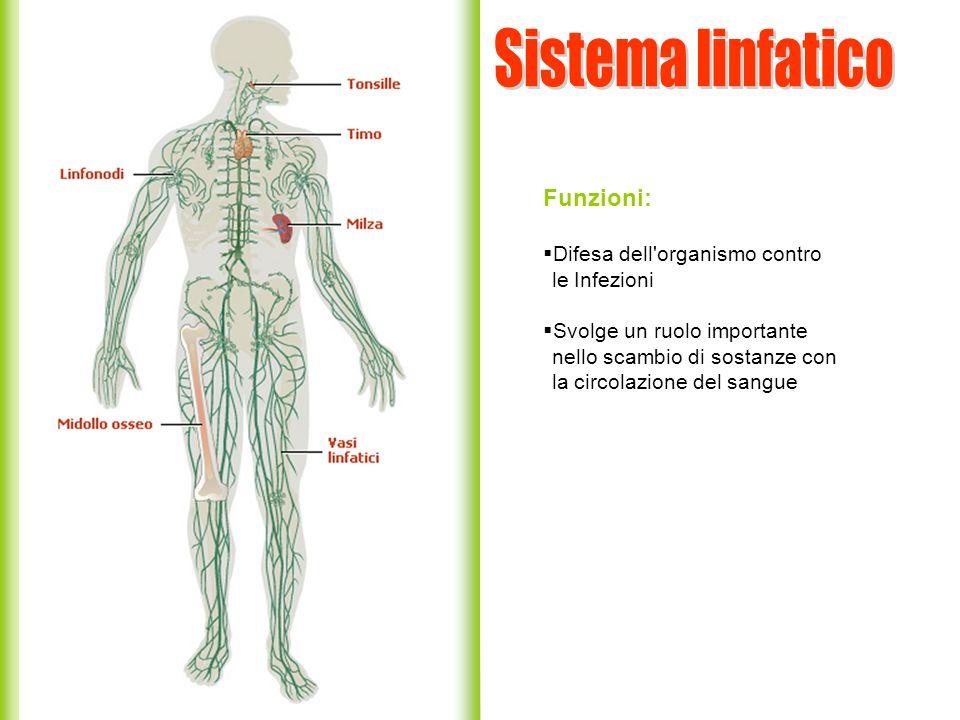 Sistema linfatico Funzioni: Difesa dell organismo contro le Infezioni