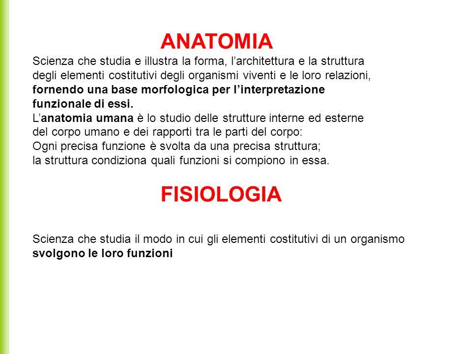 ANATOMIA Scienza che studia e illustra la forma, l'architettura e la struttura.