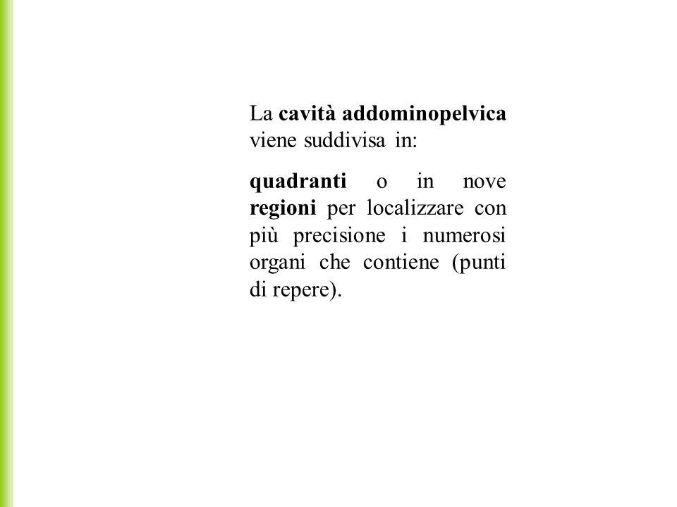 La cavità addominopelvica viene suddivisa in: