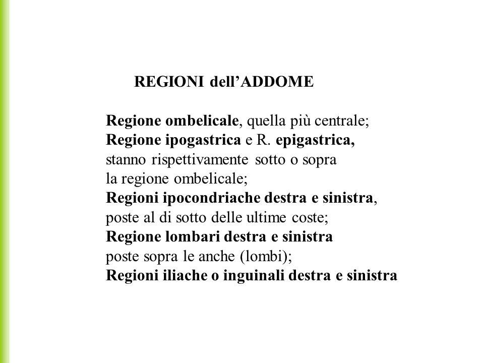 REGIONI dell'ADDOME Regione ombelicale, quella più centrale; Regione ipogastrica e R. epigastrica,