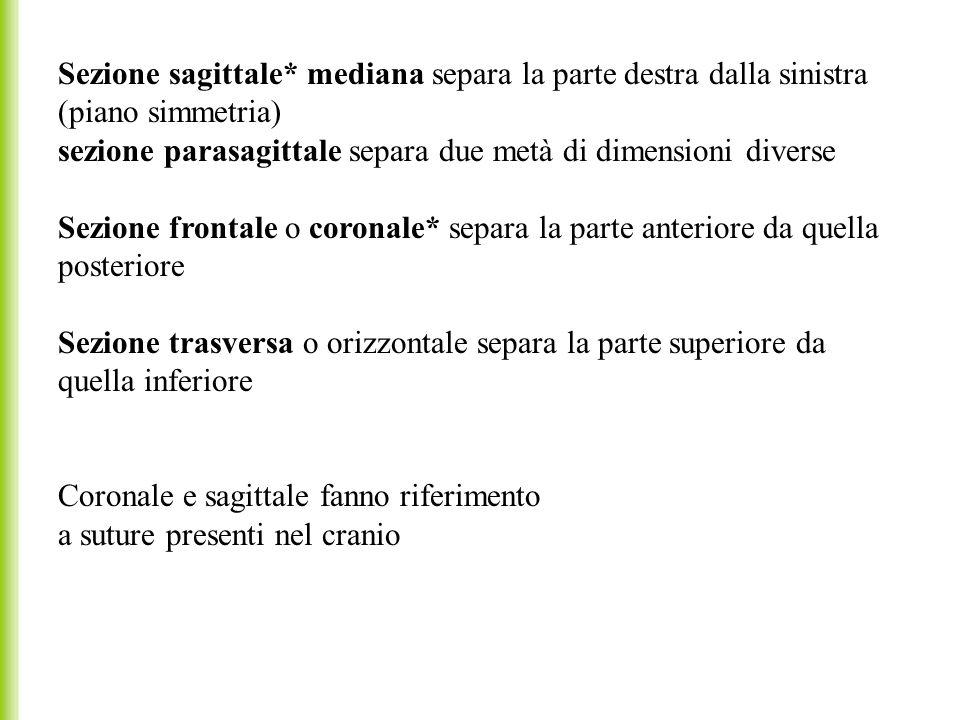 Sezione sagittale* mediana separa la parte destra dalla sinistra