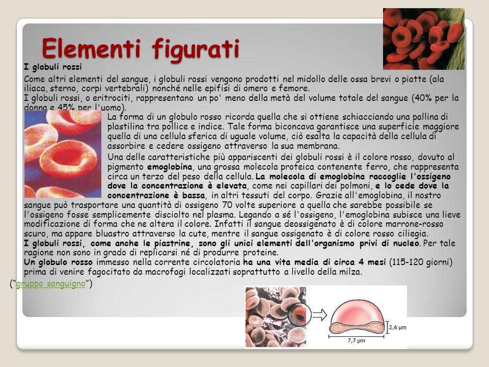 Elementi figurati I globuli rossi