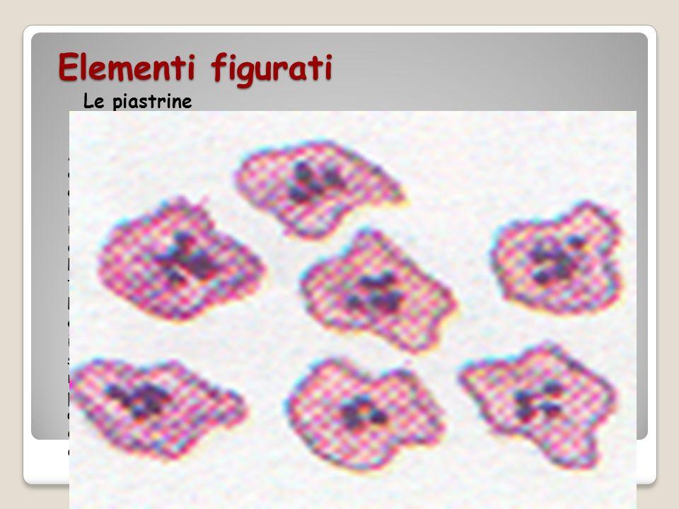 Elementi figurati Le piastrine