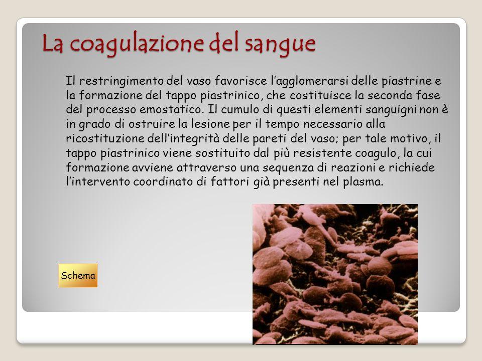 La coagulazione del sangue