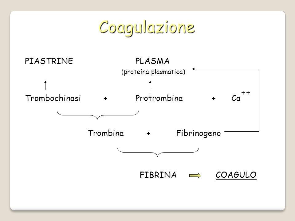 Coagulazione PIASTRINE PLASMA Trombochinasi + Protrombina + Ca