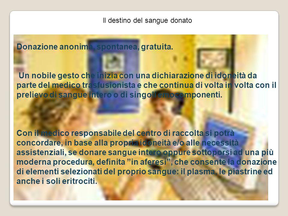 ll destino del sangue donato