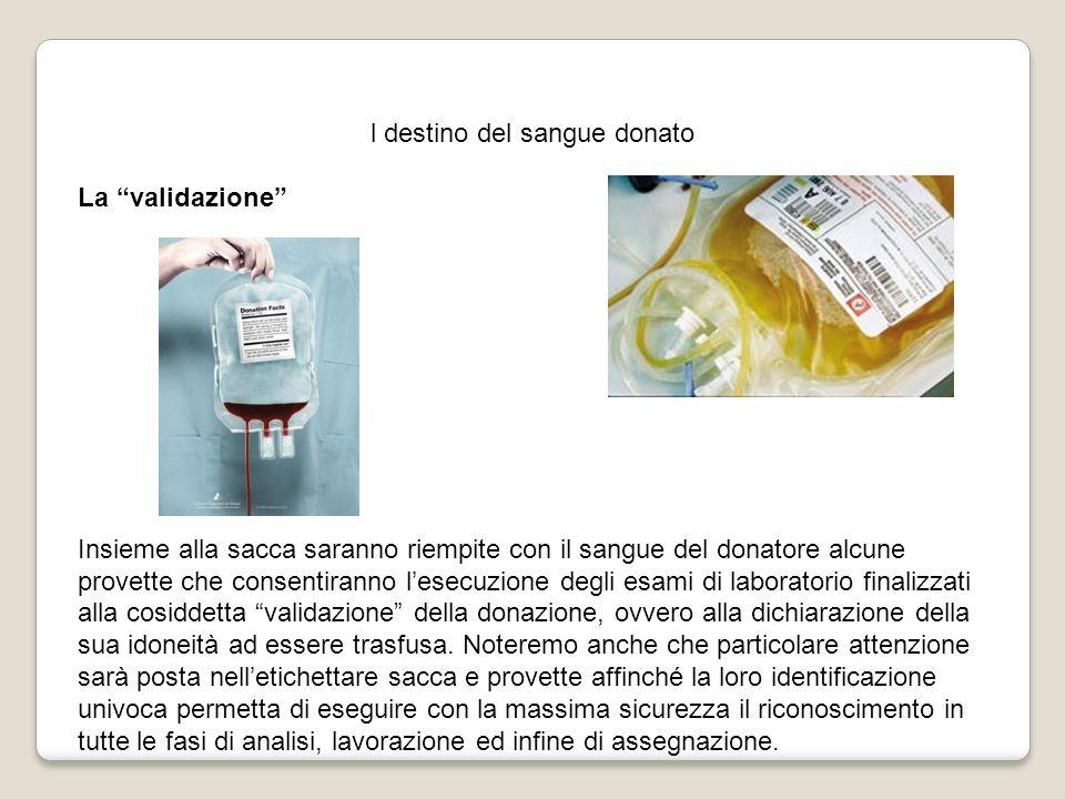 l destino del sangue donato