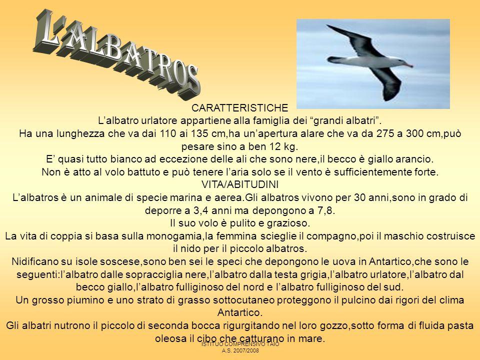 L ALBATROS CARATTERISTICHE