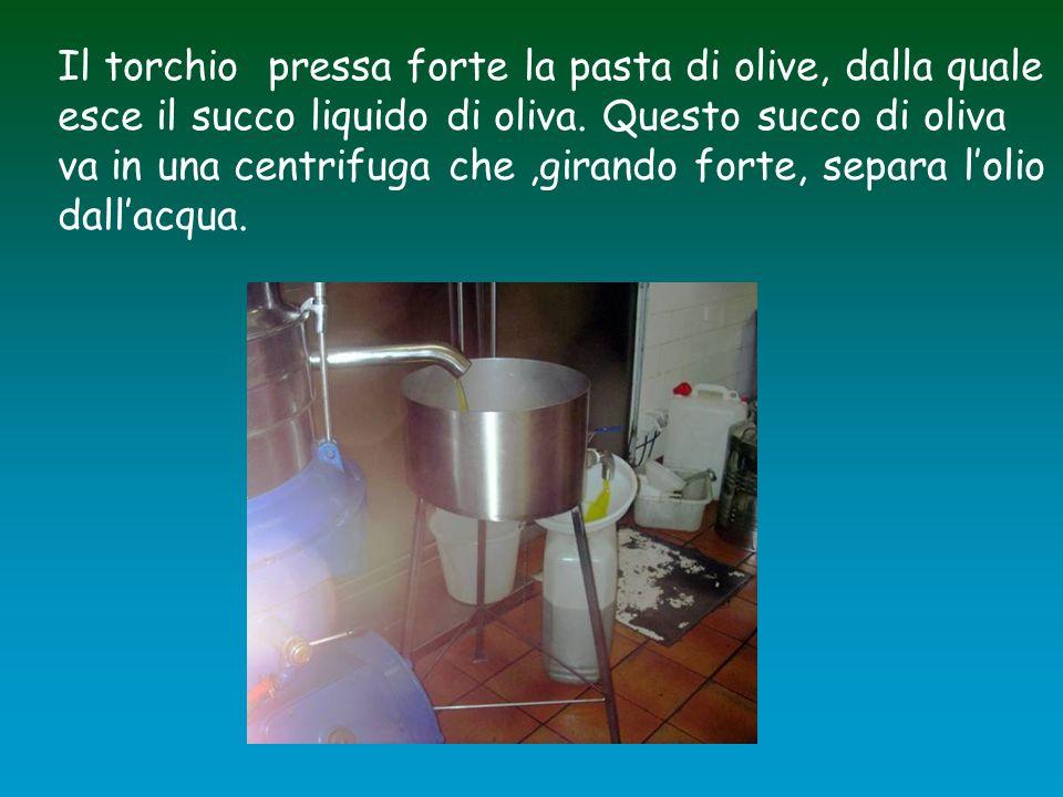 Il torchio pressa forte la pasta di olive, dalla quale esce il succo liquido di oliva.
