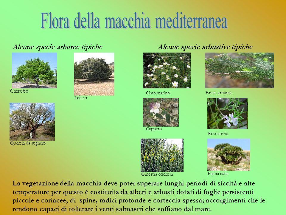 Flora della macchia mediterranea