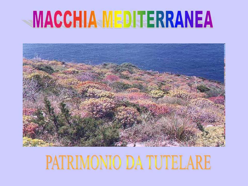 PATRIMONIO DA TUTELARE