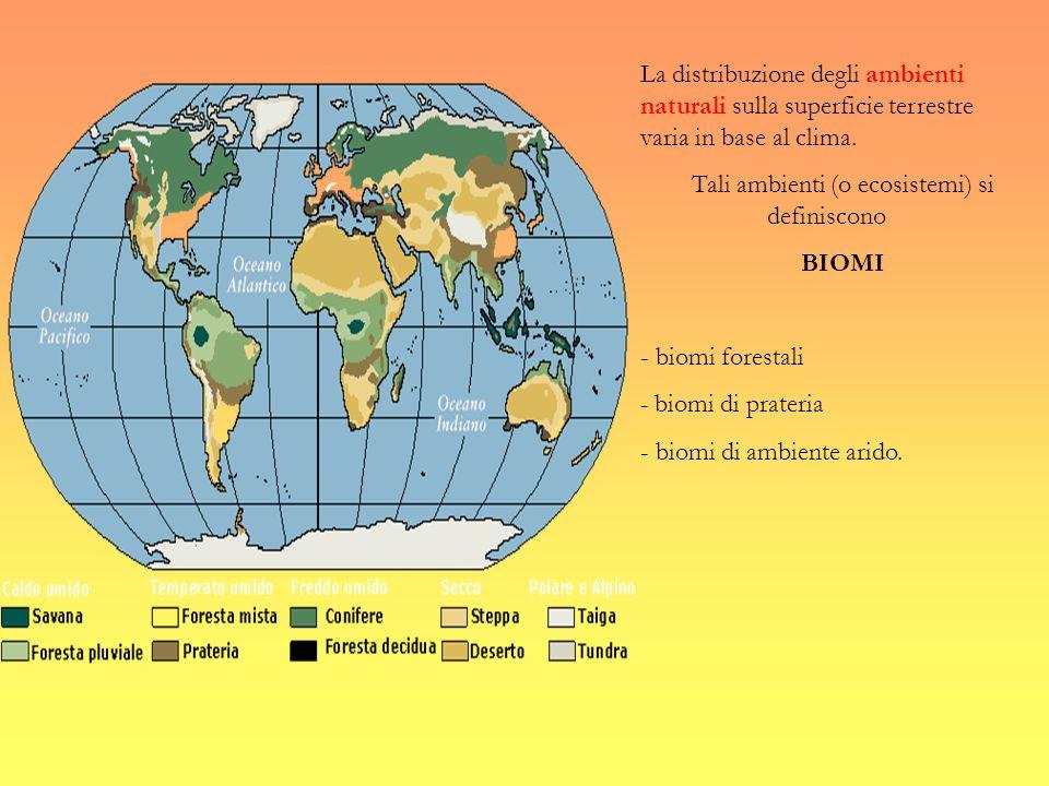 Tali ambienti (o ecosistemi) si definiscono