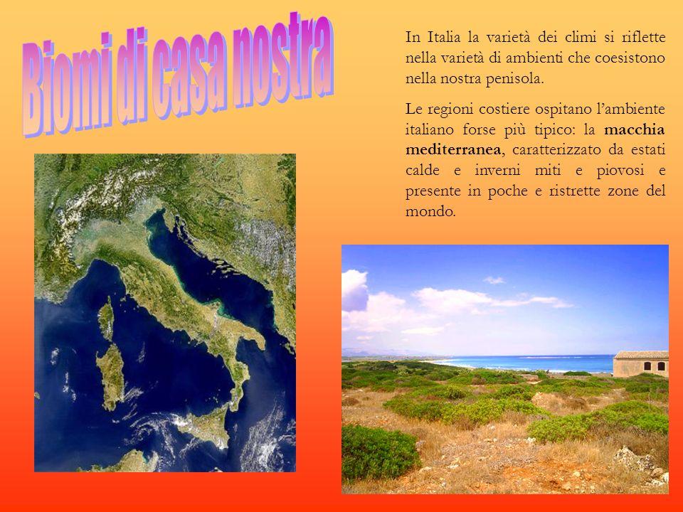 Biomi di casa nostra In Italia la varietà dei climi si riflette nella varietà di ambienti che coesistono nella nostra penisola.