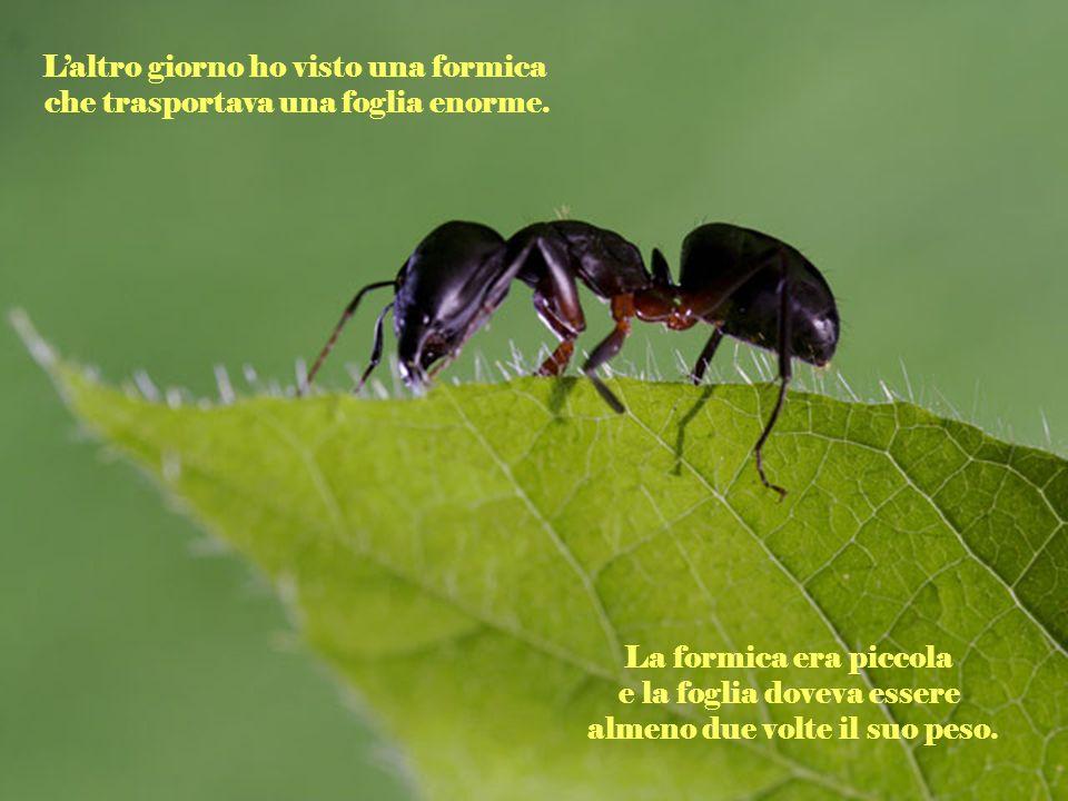 L'altro giorno ho visto una formica che trasportava una foglia enorme.