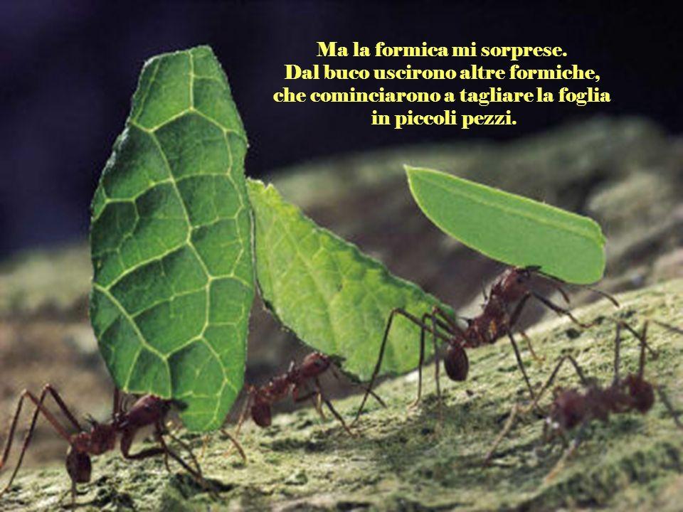 Ma la formica mi sorprese. Dal buco uscirono altre formiche,