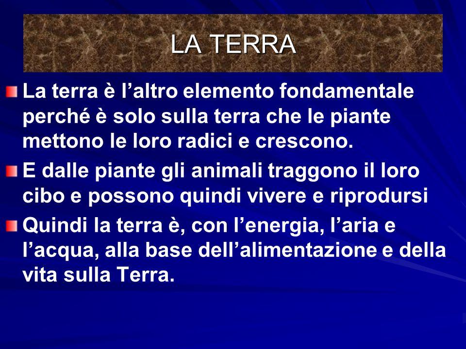 LA TERRA La terra è l'altro elemento fondamentale perché è solo sulla terra che le piante mettono le loro radici e crescono.