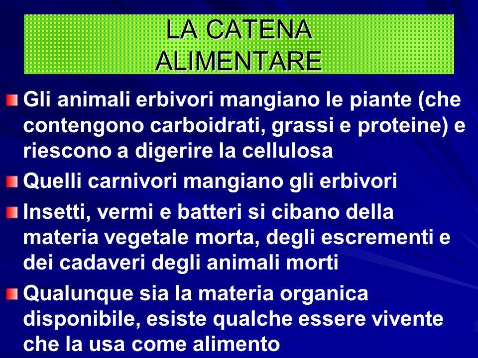 LA CATENA ALIMENTARE Gli animali erbivori mangiano le piante (che contengono carboidrati, grassi e proteine) e riescono a digerire la cellulosa.