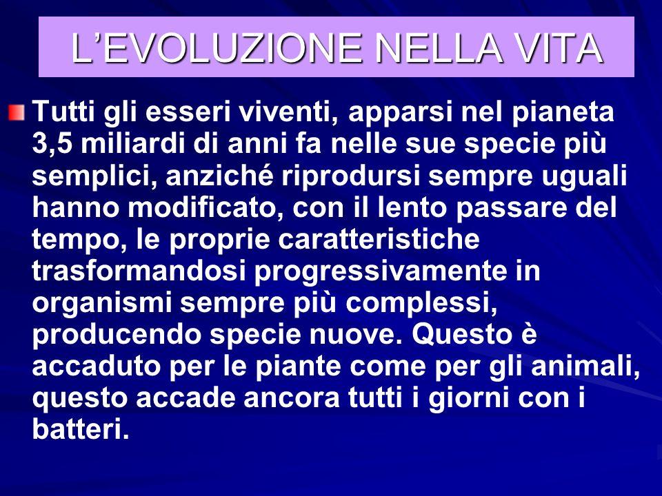 L'EVOLUZIONE NELLA VITA