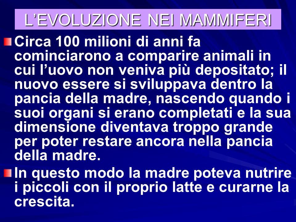 L'EVOLUZIONE NEI MAMMIFERI