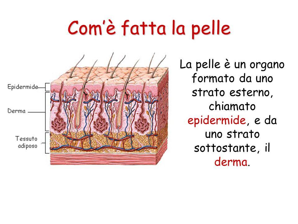 Com'è fatta la pelle La pelle è un organo formato da uno strato esterno, chiamato epidermide, e da uno strato sottostante, il derma.