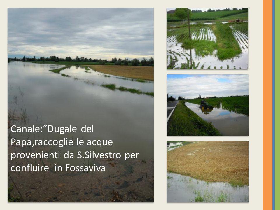 Canale: Dugale del Papa,raccoglie le acque provenienti da S