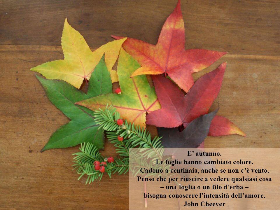 Le foglie hanno cambiato colore.