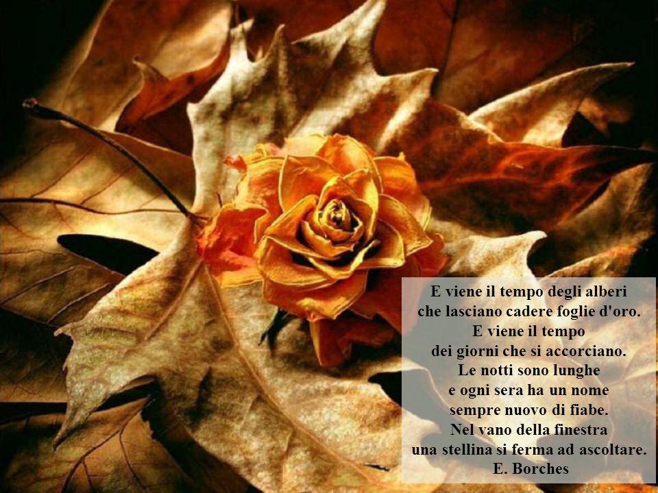 E viene il tempo degli alberi che lasciano cadere foglie d oro