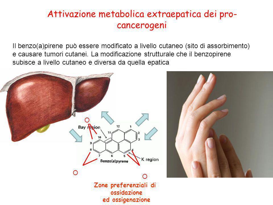 Attivazione metabolica extraepatica dei pro-cancerogeni