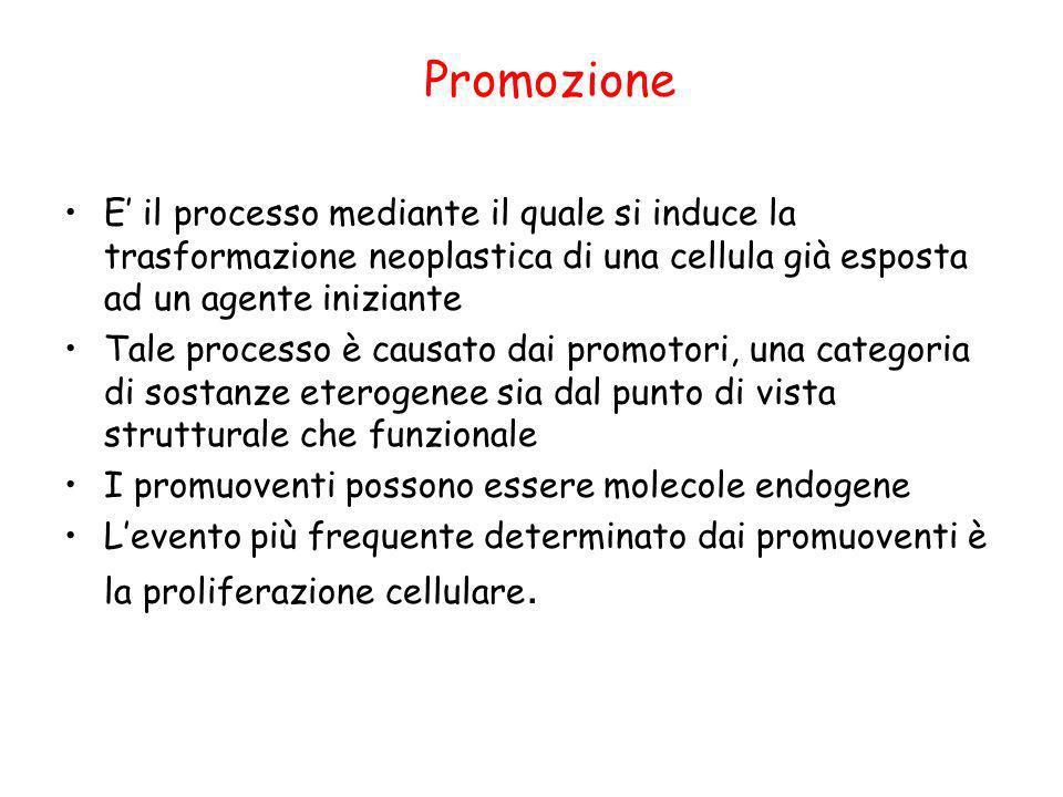 Promozione E' il processo mediante il quale si induce la trasformazione neoplastica di una cellula già esposta ad un agente iniziante.
