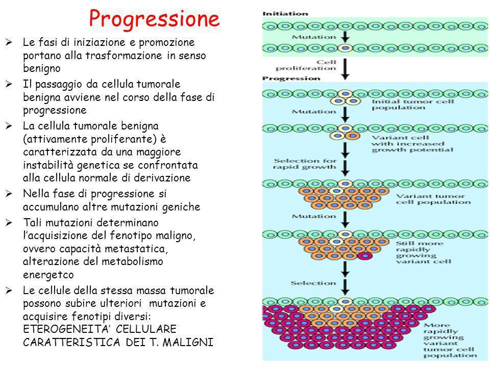 Progressione Le fasi di iniziazione e promozione portano alla trasformazione in senso benigno.