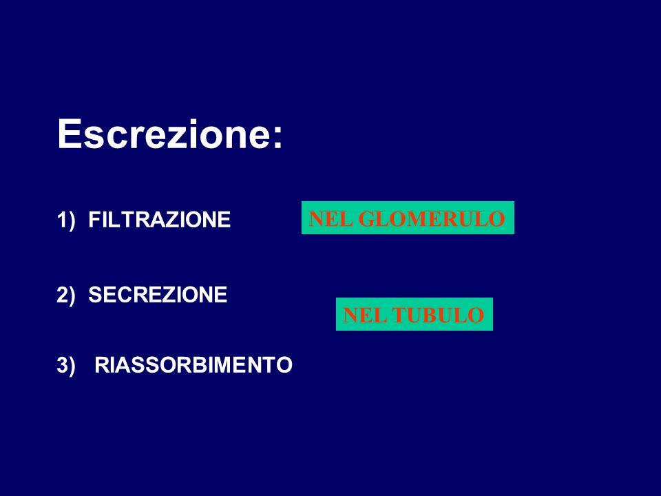 Escrezione: 1) FILTRAZIONE 2) SECREZIONE 3) RIASSORBIMENTO