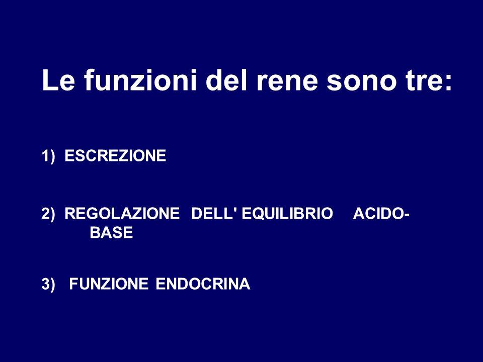 Le funzioni del rene sono tre: 1) ESCREZIONE 2) REGOLAZIONE DELL EQUILIBRIO ACIDO- BASE 3) FUNZIONE ENDOCRINA