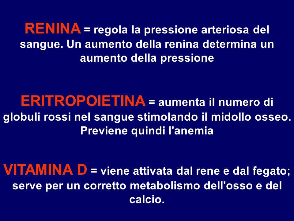 RENINA = regola la pressione arteriosa del sangue