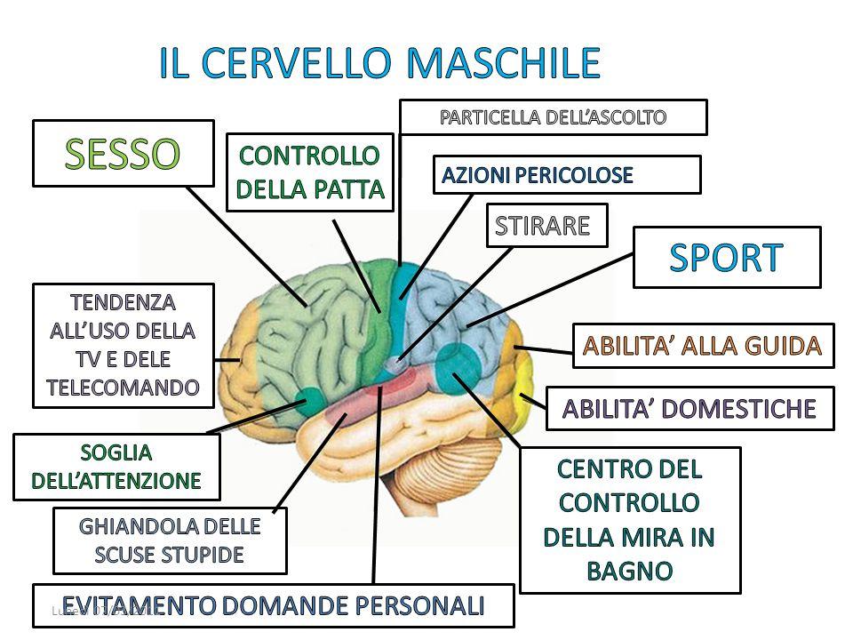 IL CERVELLO MASCHILE SESSO SPORT CONTROLLO DELLA PATTA STIRARE