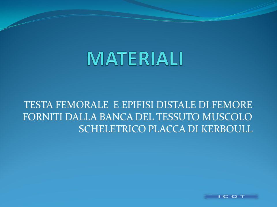 MATERIALI TESTA FEMORALE E EPIFISI DISTALE DI FEMORE FORNITI DALLA BANCA DEL TESSUTO MUSCOLO SCHELETRICO PLACCA DI KERBOULL.