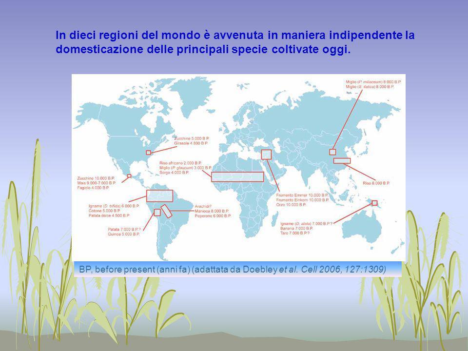 In dieci regioni del mondo è avvenuta in maniera indipendente la domesticazione delle principali specie coltivate oggi.