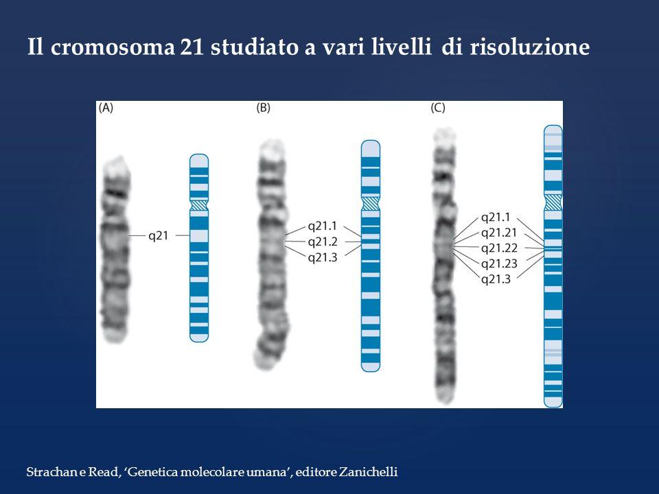 Il cromosoma 21 studiato a vari livelli di risoluzione