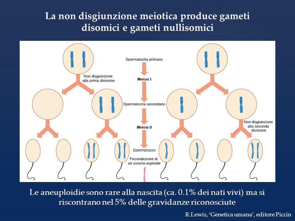 La non disgiunzione meiotica produce gameti disomici e gameti nullisomici