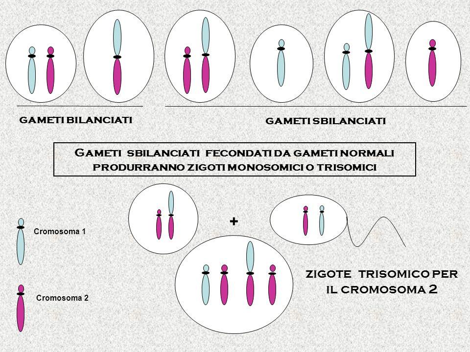zigote trisomico per il cromosoma 2