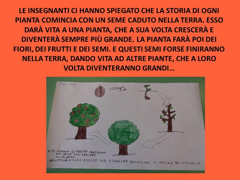 Progetto pollicino verde i bambini della scuola d infanzia for Una storia a pianta aperta