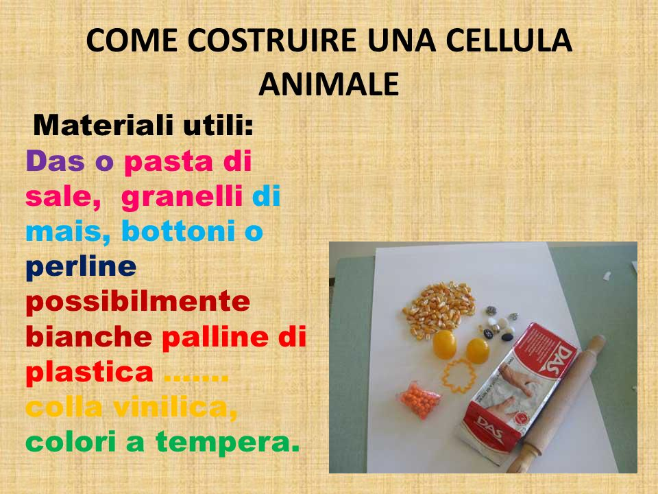 COME COSTRUIRE UNA CELLULA ANIMALE