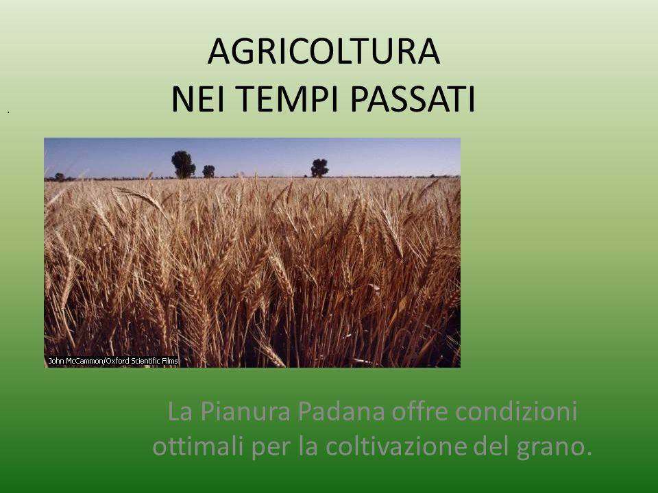 AGRICOLTURA NEI TEMPI PASSATI