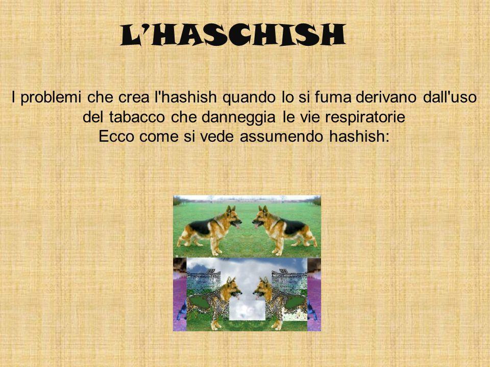 Ecco come si vede assumendo hashish:
