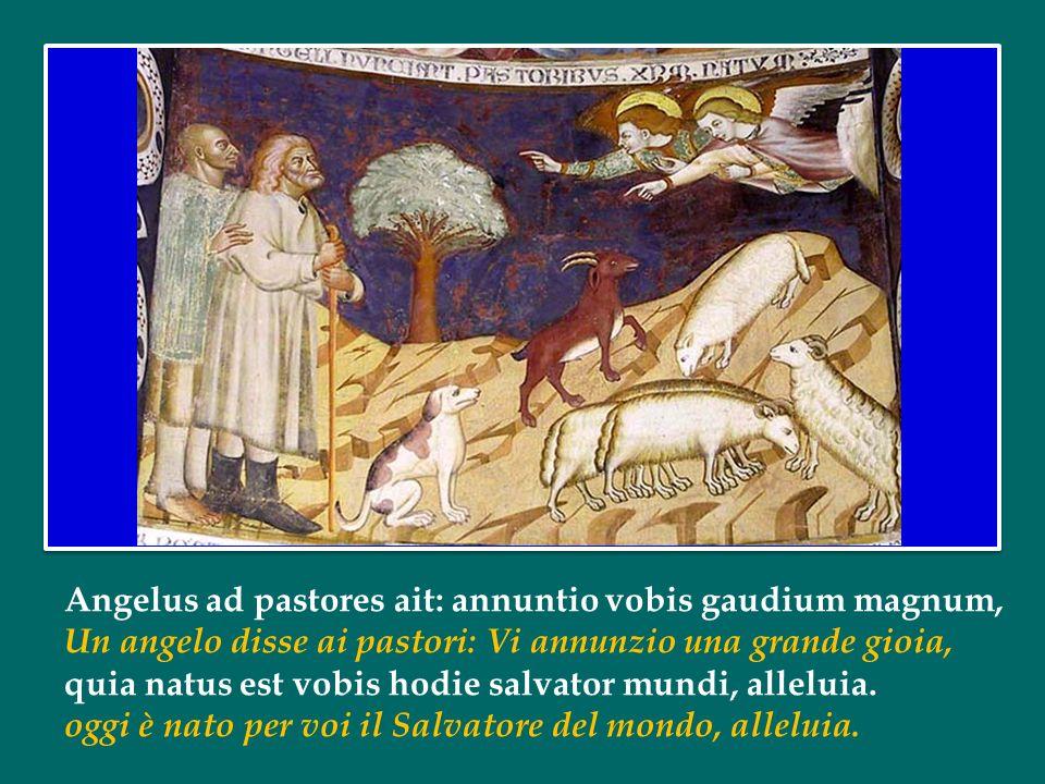 Angelus ad pastores ait: annuntio vobis gaudium magnum, Un angelo disse ai pastori: Vi annunzio una grande gioia, quia natus est vobis hodie salvator mundi, alleluia.