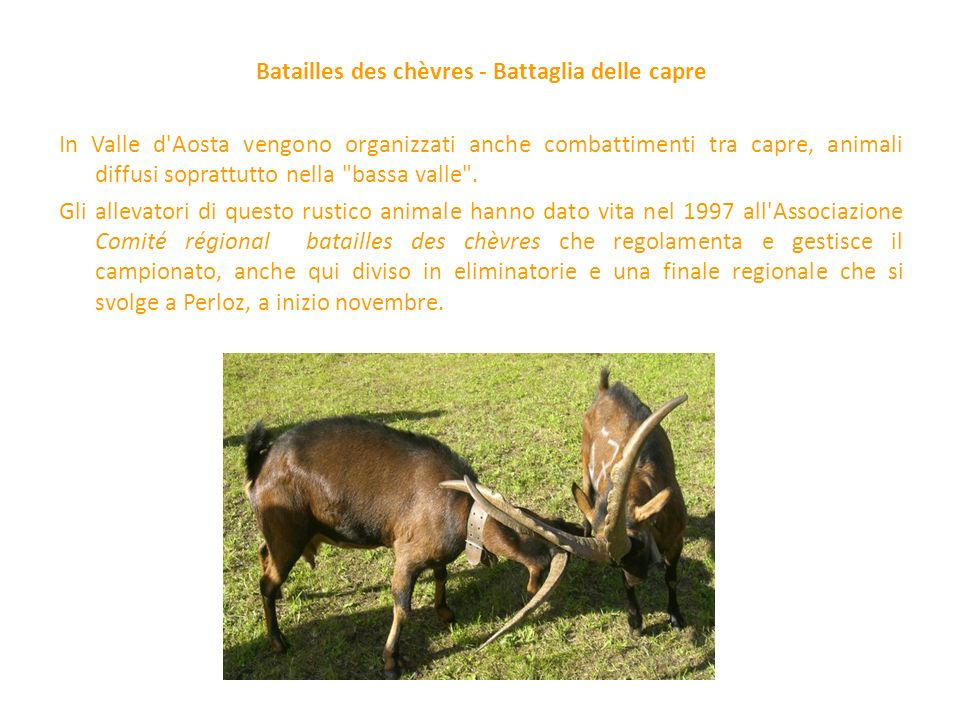 Batailles des chèvres - Battaglia delle capre