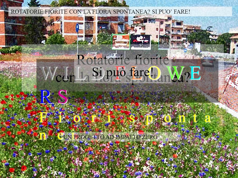 Rotatorie fiorite con la flora spontanea