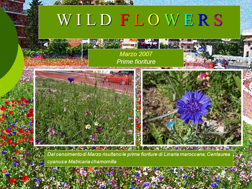 W I L D F L O W E R S Marzo 2007 Prime fioriture