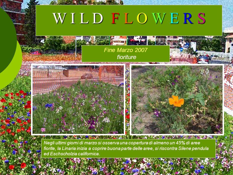 W I L D F L O W E R S Fine Marzo 2007 fioriture